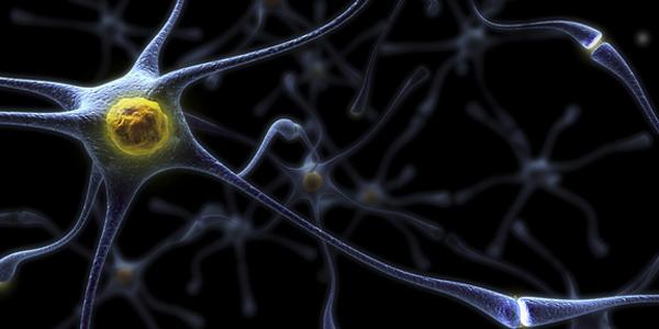 Celulele nervoase noi distrug amintirile vechi